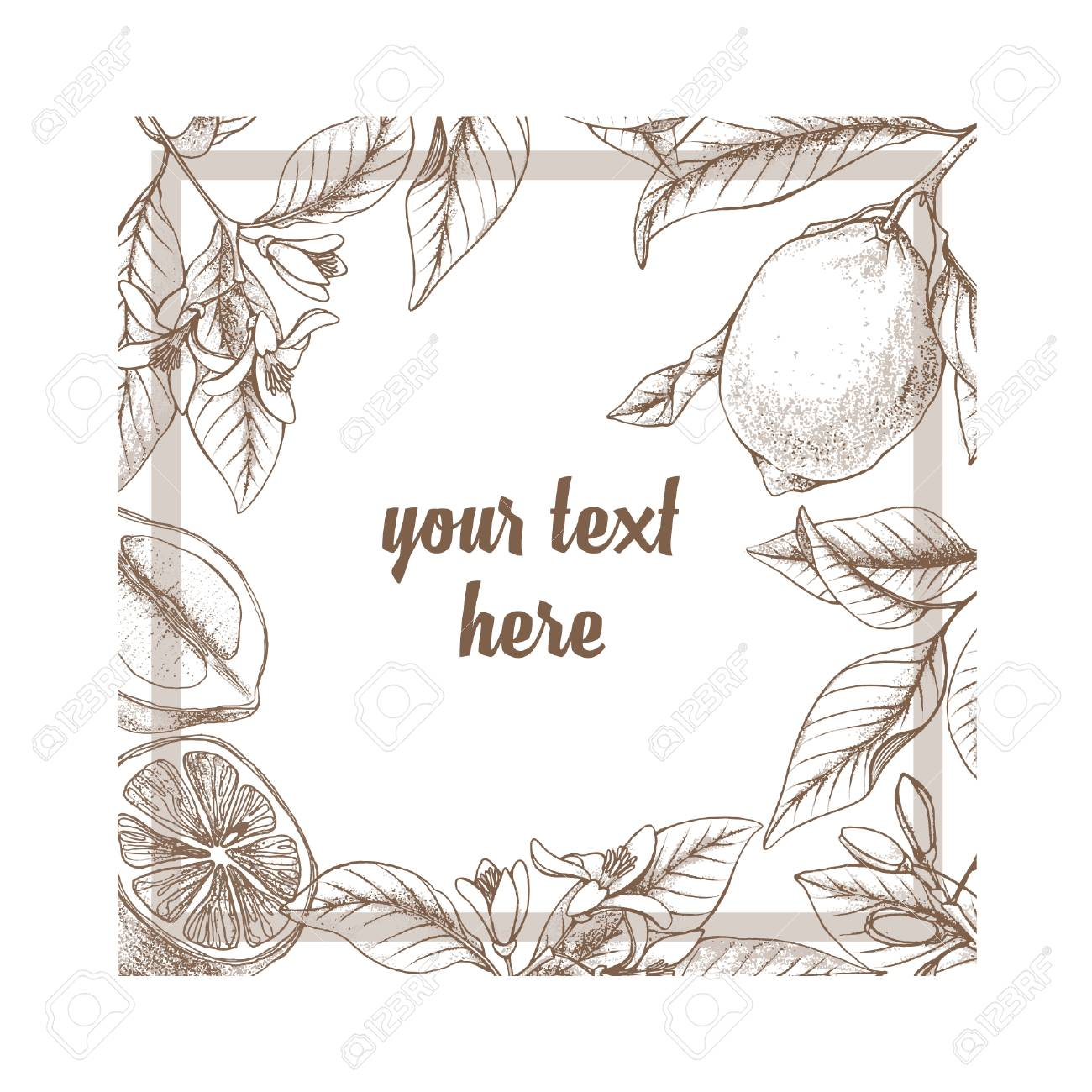 Vintage Botanical Lemon Square Frame Background Hand Drawn Outline