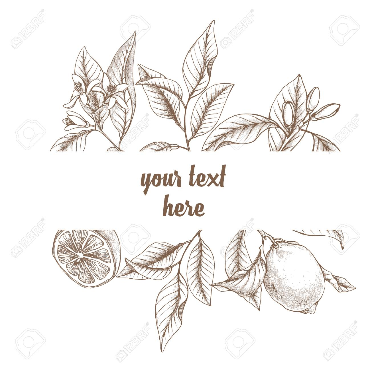 Vintage Botanical Lemon Line Frame Background Hand Drawn Outline