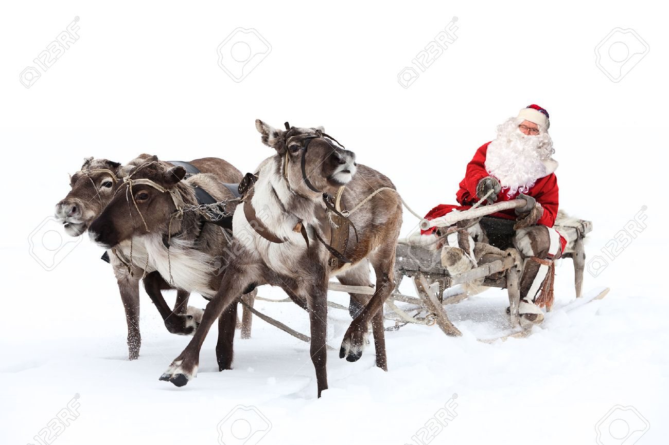 reindeer stock photos u0026 pictures royalty free reindeer images and
