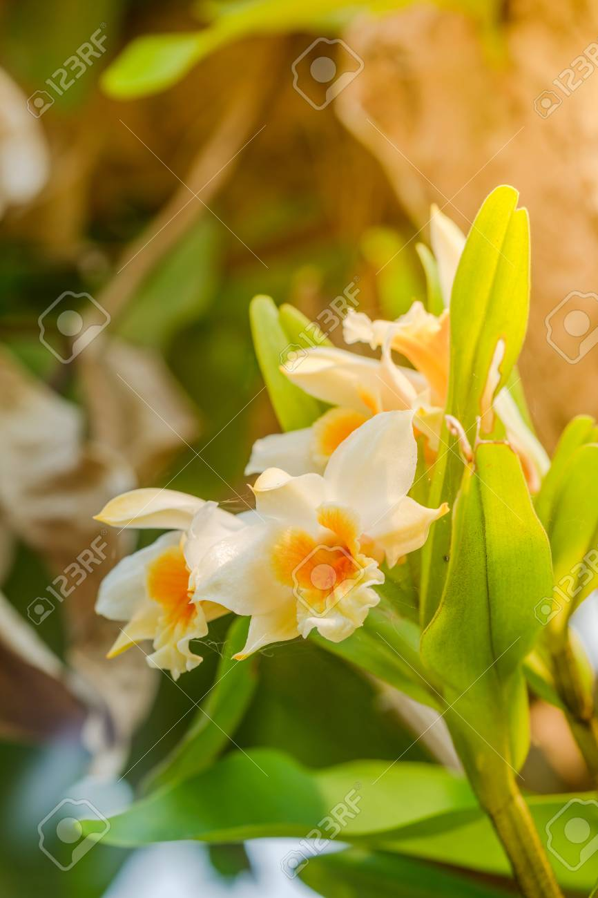 Closeup orchid flowers beautiful yellow orchid flowers stock photo closeup orchid flowers beautiful yellow orchid flowers stock photo 67075550 mightylinksfo