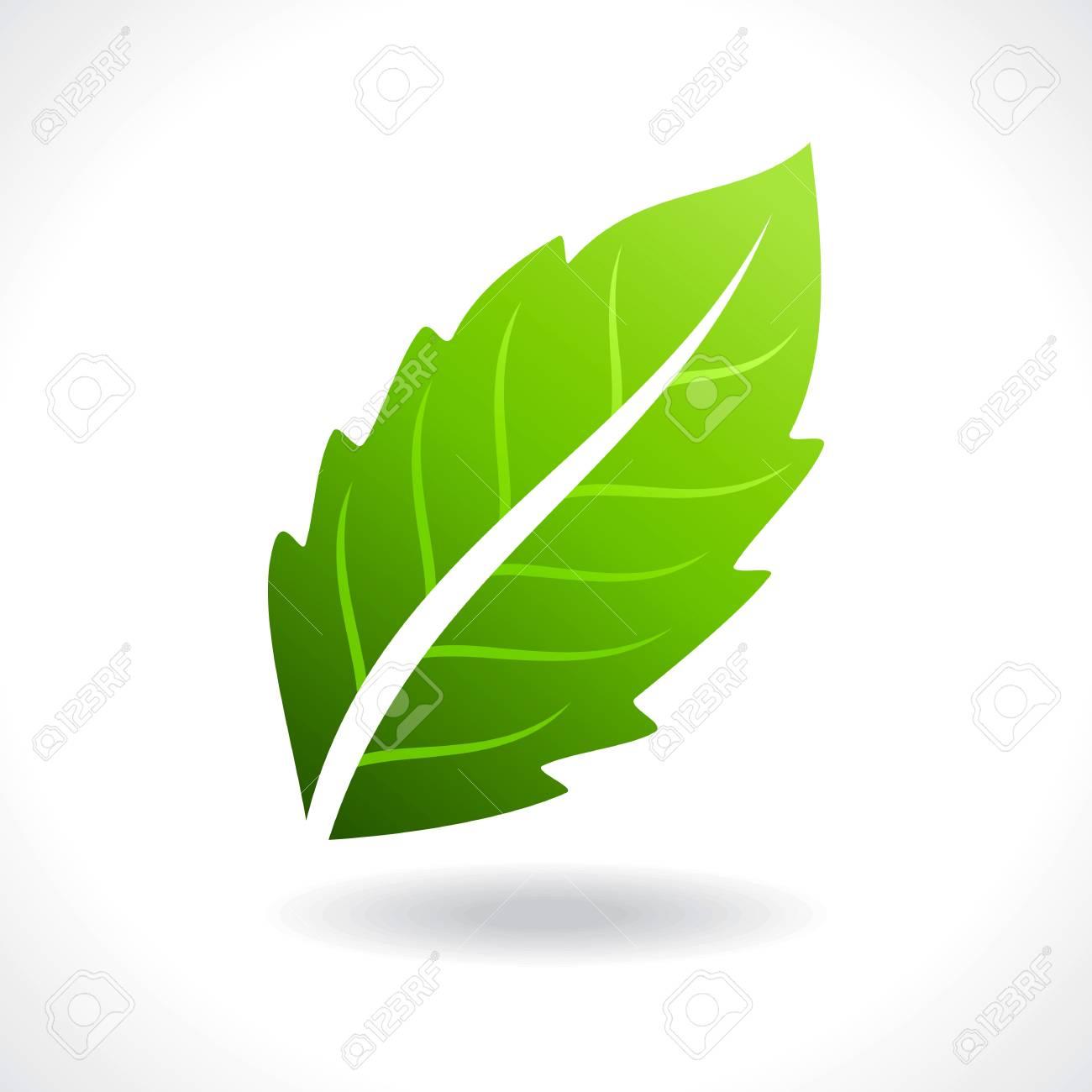 fresh green leaves Stock Vector - 17635077