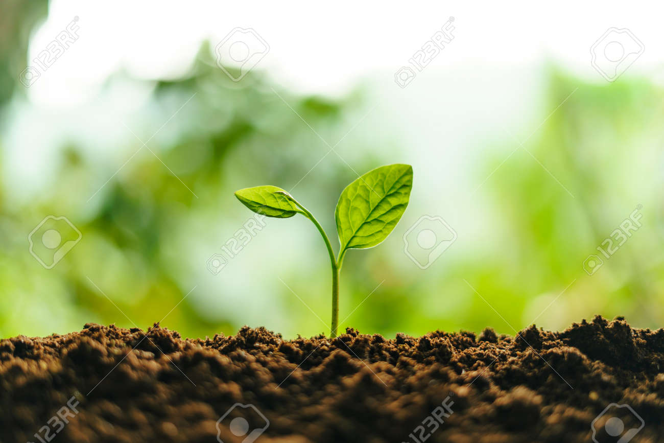 Small trees on the soil in nature Planting trees - 165810700
