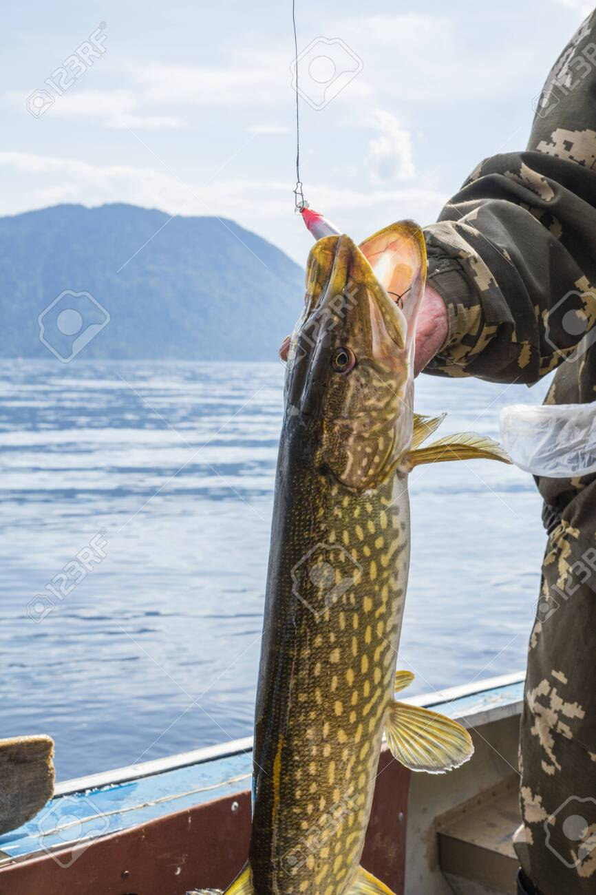 Trophy fish in the hands of a fisherman on the background of mountains and water. Pike - 123590055
