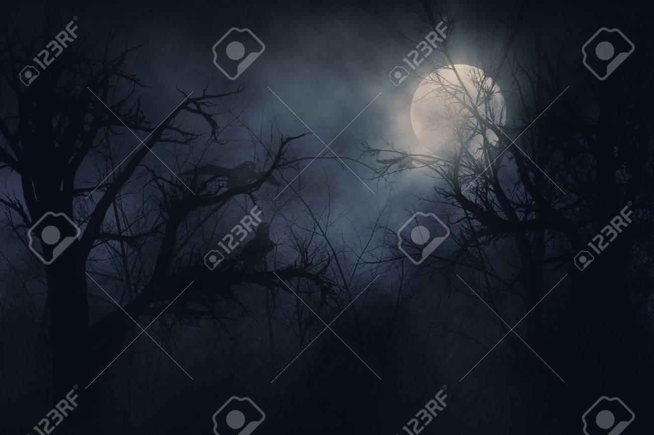 Illustration of night ravens on a trees background Stock Photo - 14566897