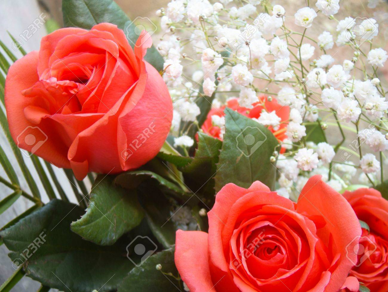 Soft Red Roses With Small White Flowers Background Stock Photo