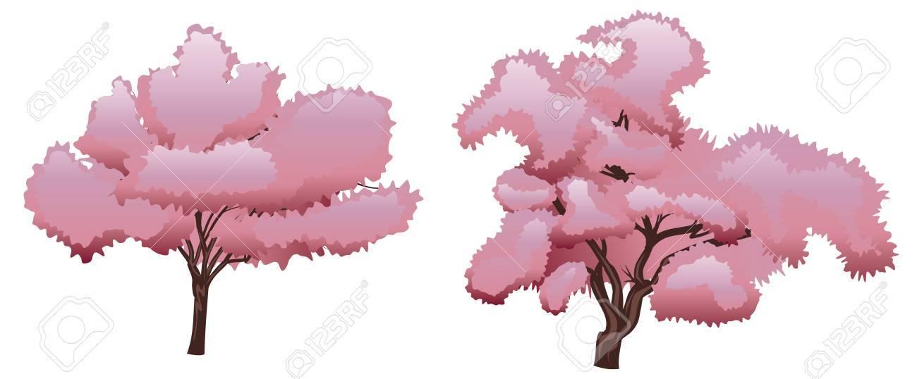 Blooming Flores De Primavera De Color Rosa Cereza, árbol De Sakura ...