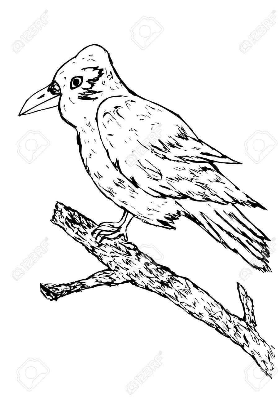Grunge Hand Drawn Illustration Of A Big Crow Sitting On A Branch