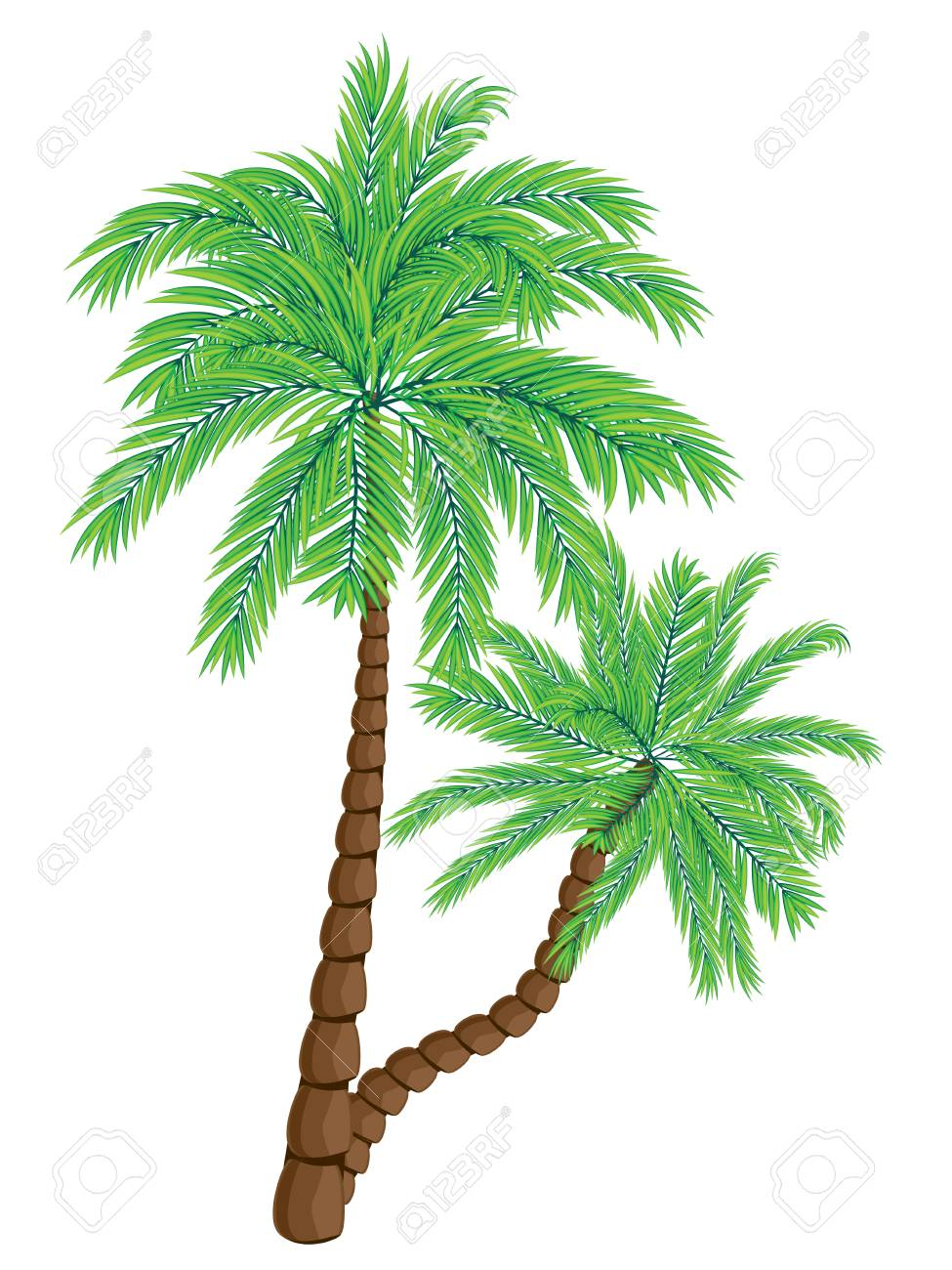 Two Colorful Palm Trees Illustration On White Background. Royalty ...