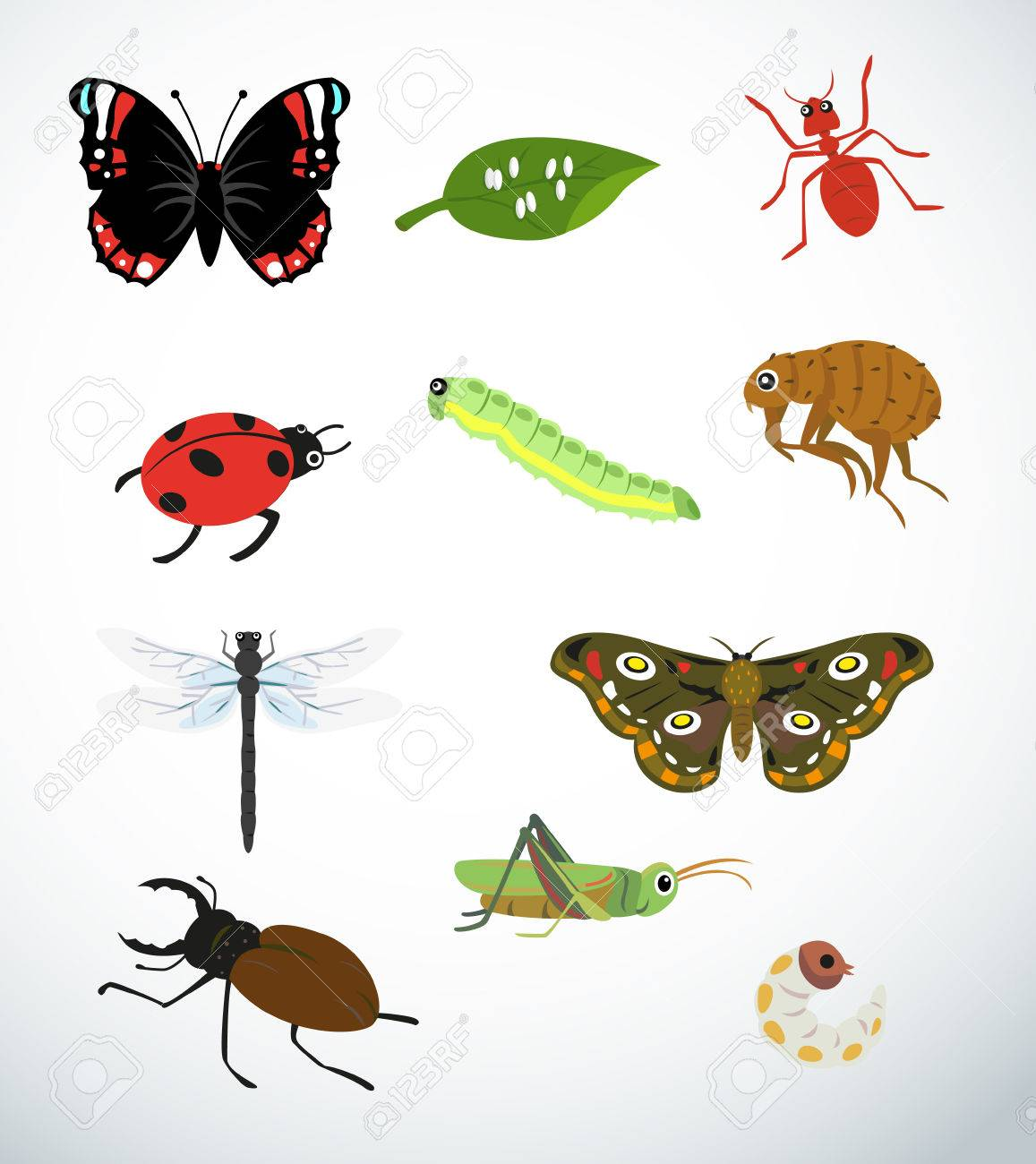 Collection For Various Types Of Insects Royalty Free Cliparts ...