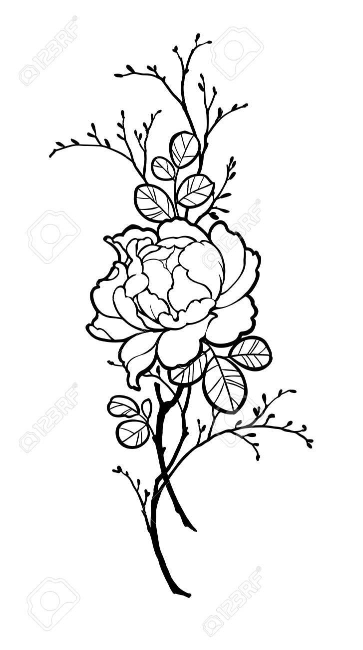 Vettoriale Fiore Di Peonia Rosa Disegnato A Mano Con Rami Per