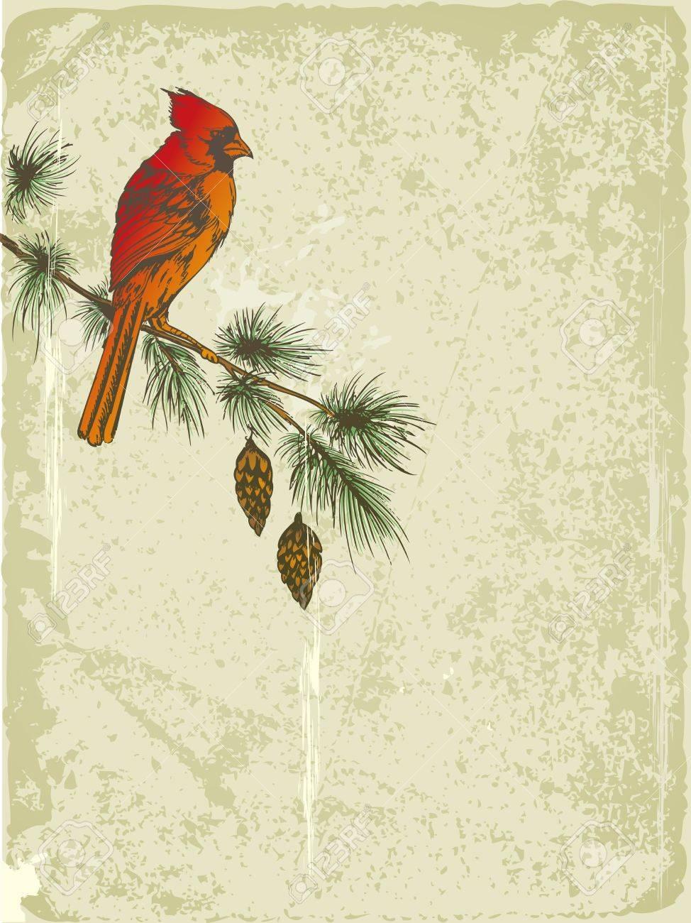 cardinal vector images u0026 stock pictures royalty free cardinal