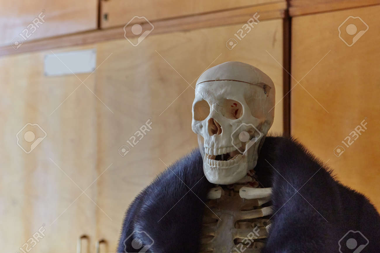 Skeleton of a man in a fur coat made of natural animal fur. Concept of Halloween, environmental protection. - 158596245