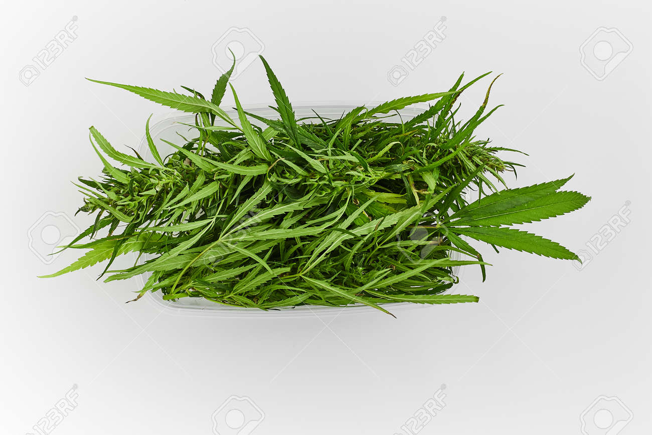 Lots of green leaves and cannabis herb marijuana in a plastic container isolated on white background - 158596253