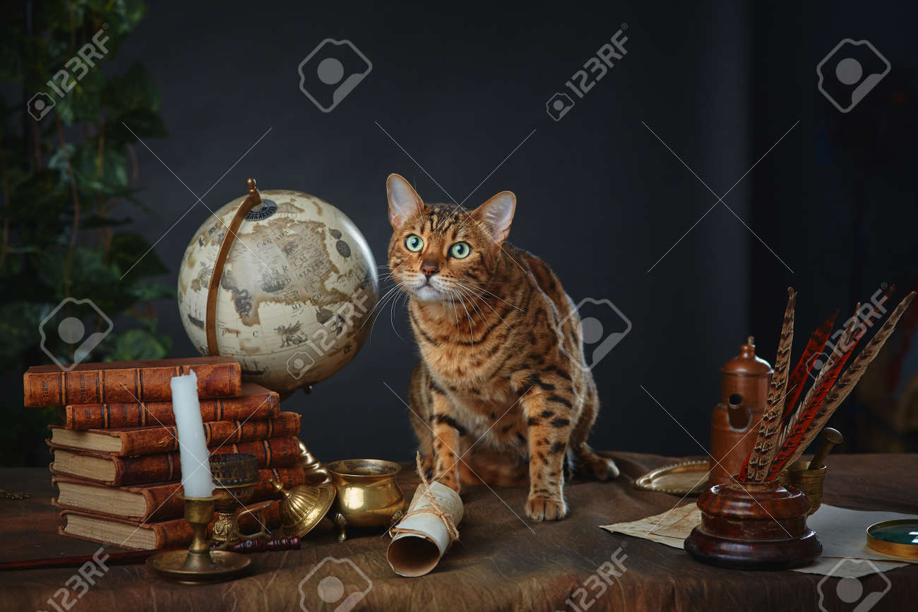 Bengal cat, vintage items, books and manuscripts on the table on a dark background. Space for your text. - 158618957