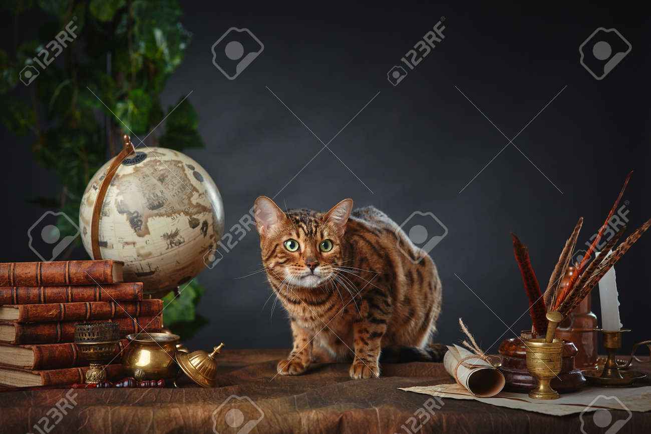 Bengal cat, vintage items, books and manuscripts on the table on a dark background. Space for your text. - 158618974