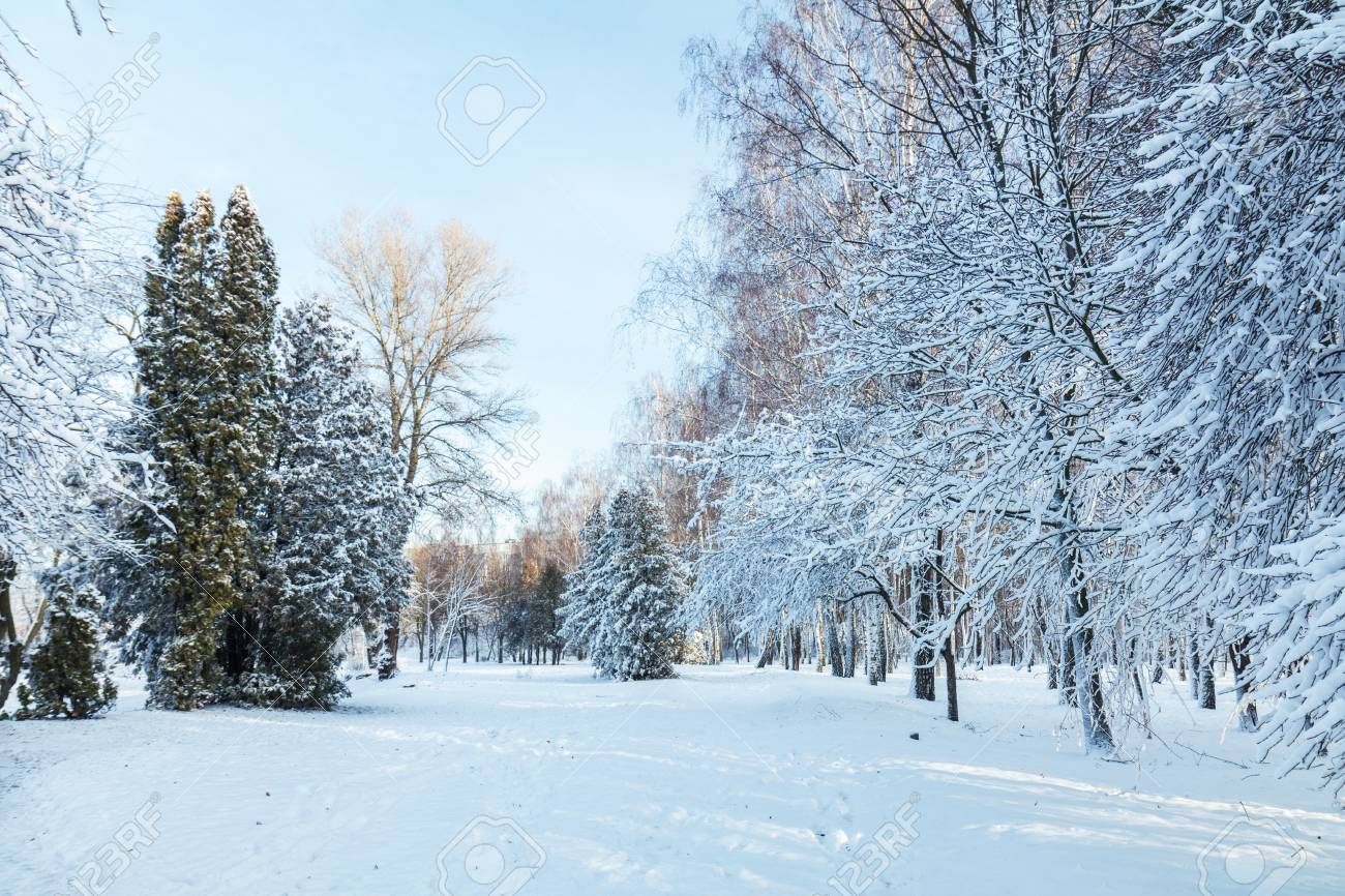 First snow in the city park with trees under fresh snow at sunrise. Sunny day in the winter city park. Stock Photo - 93070090