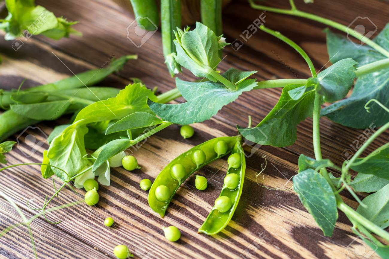 Pods of green peas and pea on a dark wooden surface. Stock Photo - 93153651