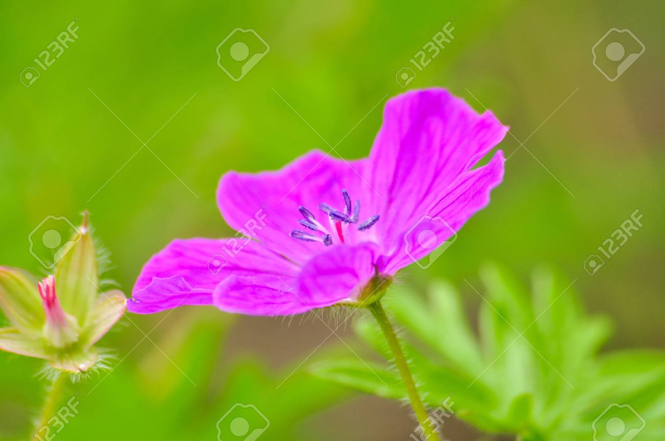wildflowers Stock Photo - 14236641