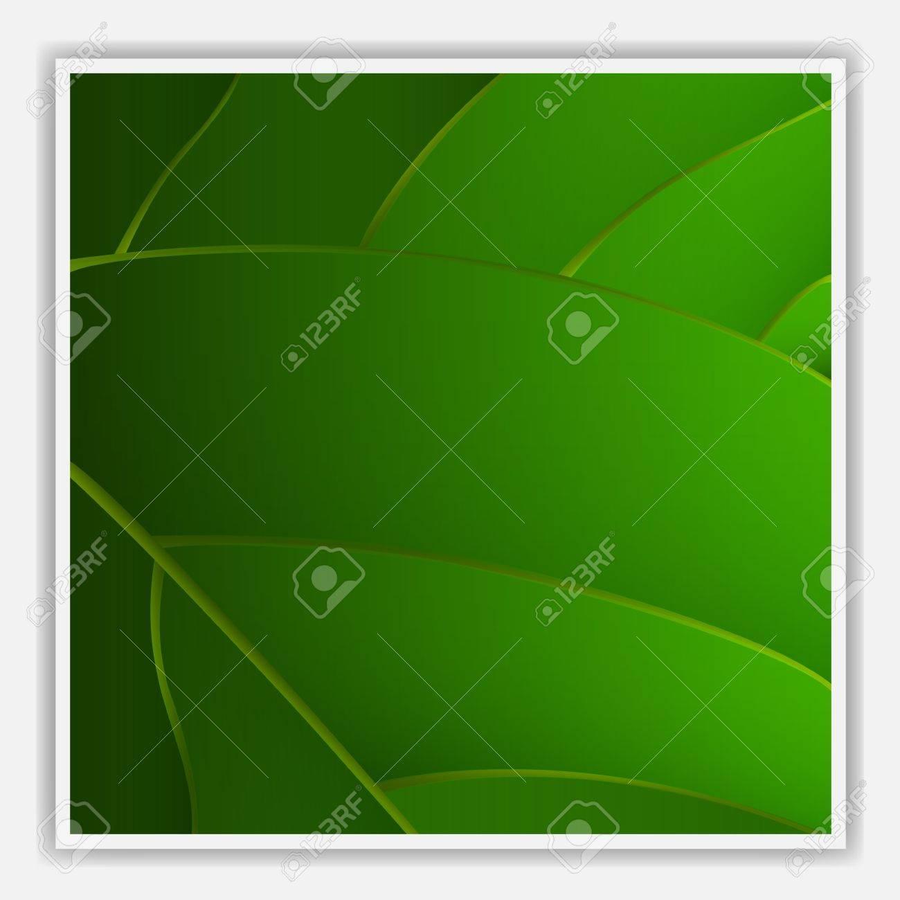 Creative leaf background.Vector eps10 Stock Vector - 12493959