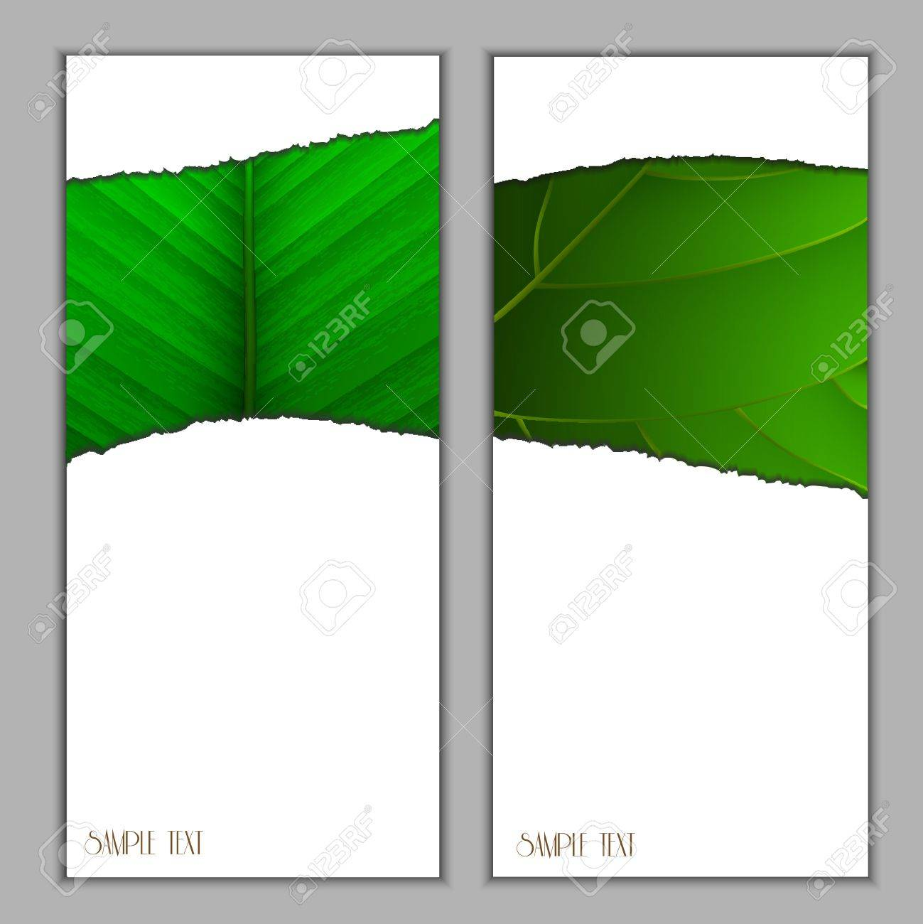 Vertical seasonal banners with green leaf .Vector eps10 Stock Vector - 12825720