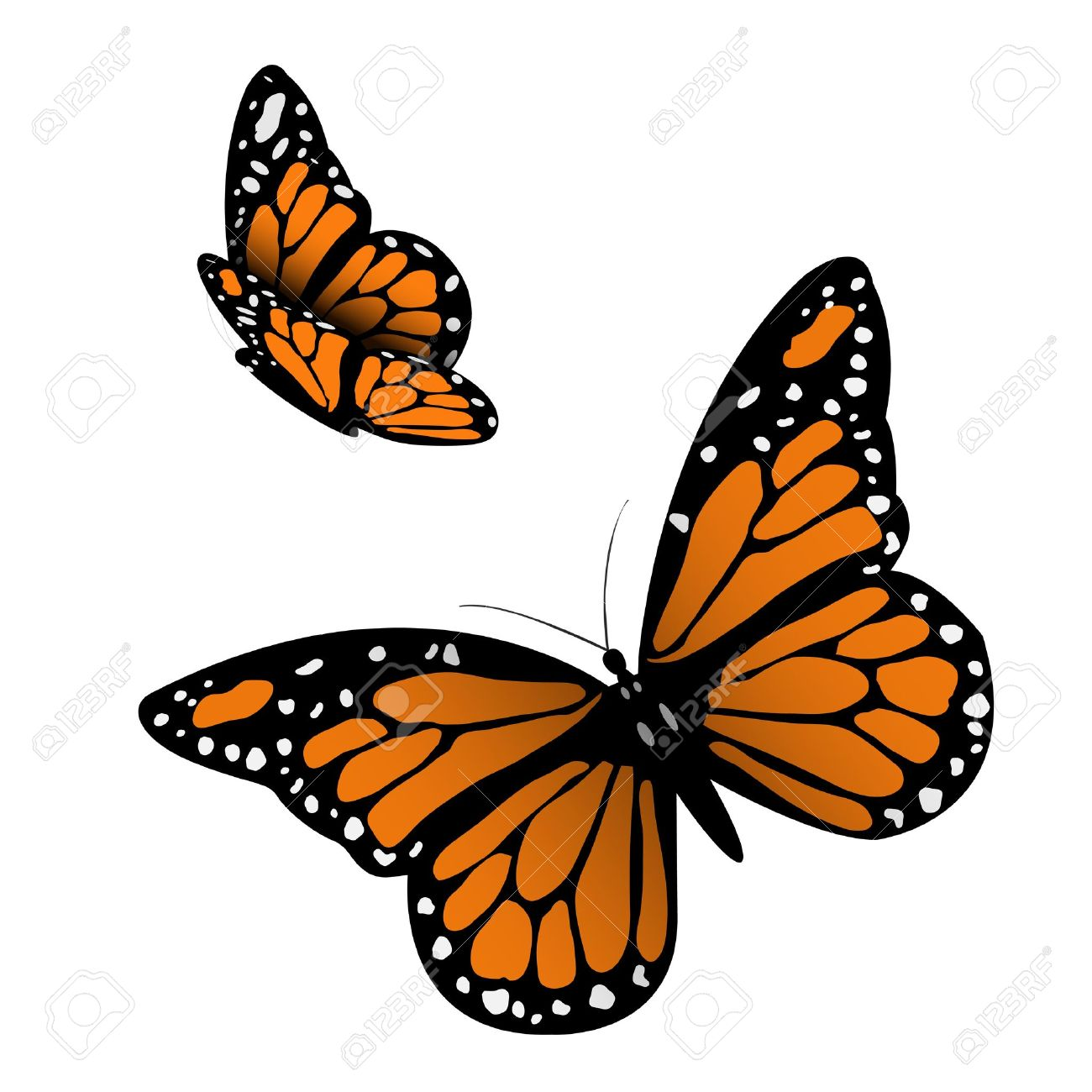 monarch butterfly illustration royalty free cliparts vectors and rh 123rf com animated butterfly clipart free butterfly free clipart