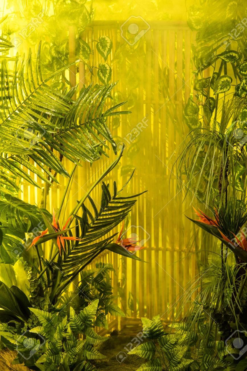 Fondo Mgico De La Jungla Tropical Fotos Retratos Imgenes Y