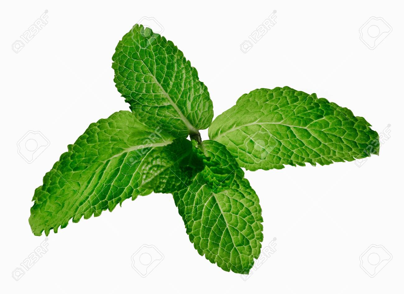 Fresh mint leaves isolated on white background - 136589668