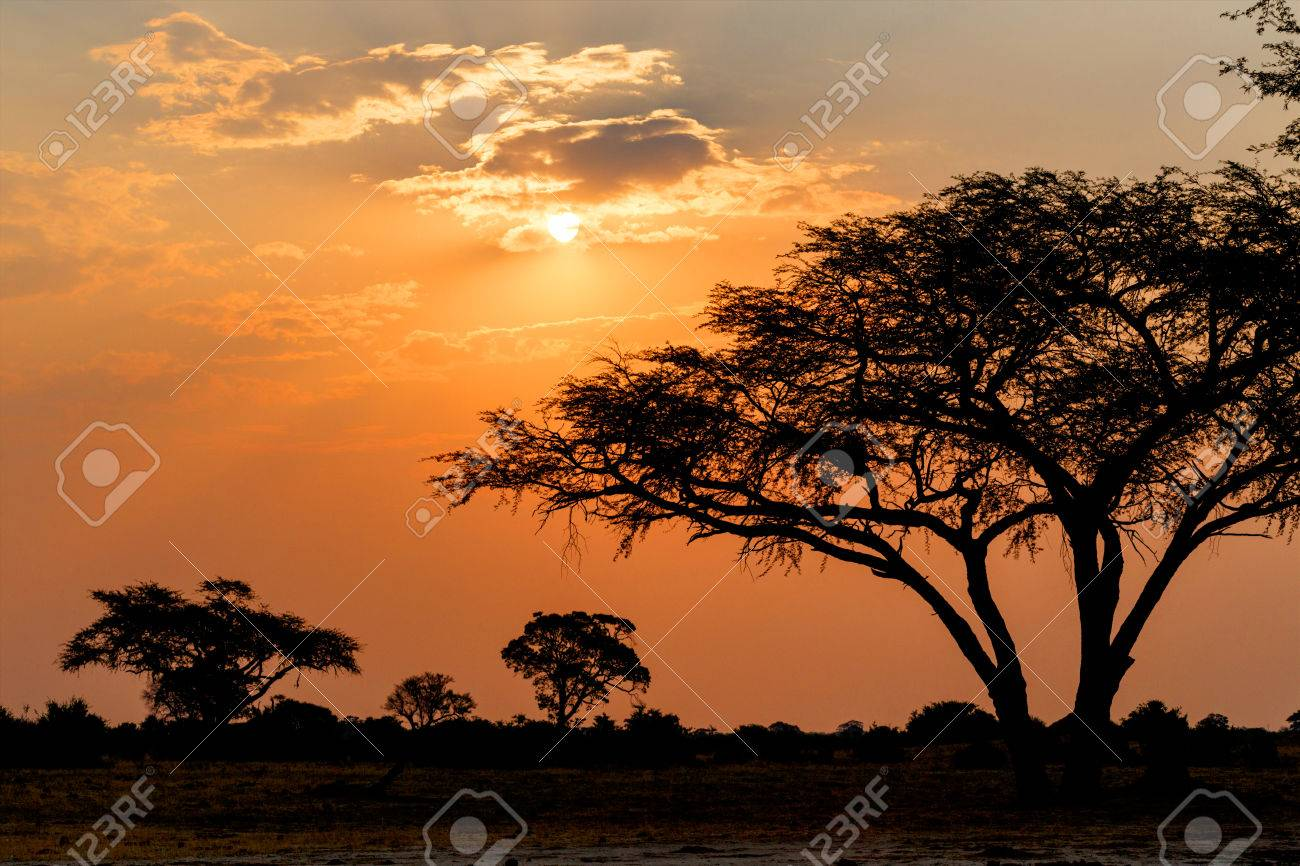 African sunset with tree in front, Hwange national park, Matabeleland, North Zimbabwe - 33427423