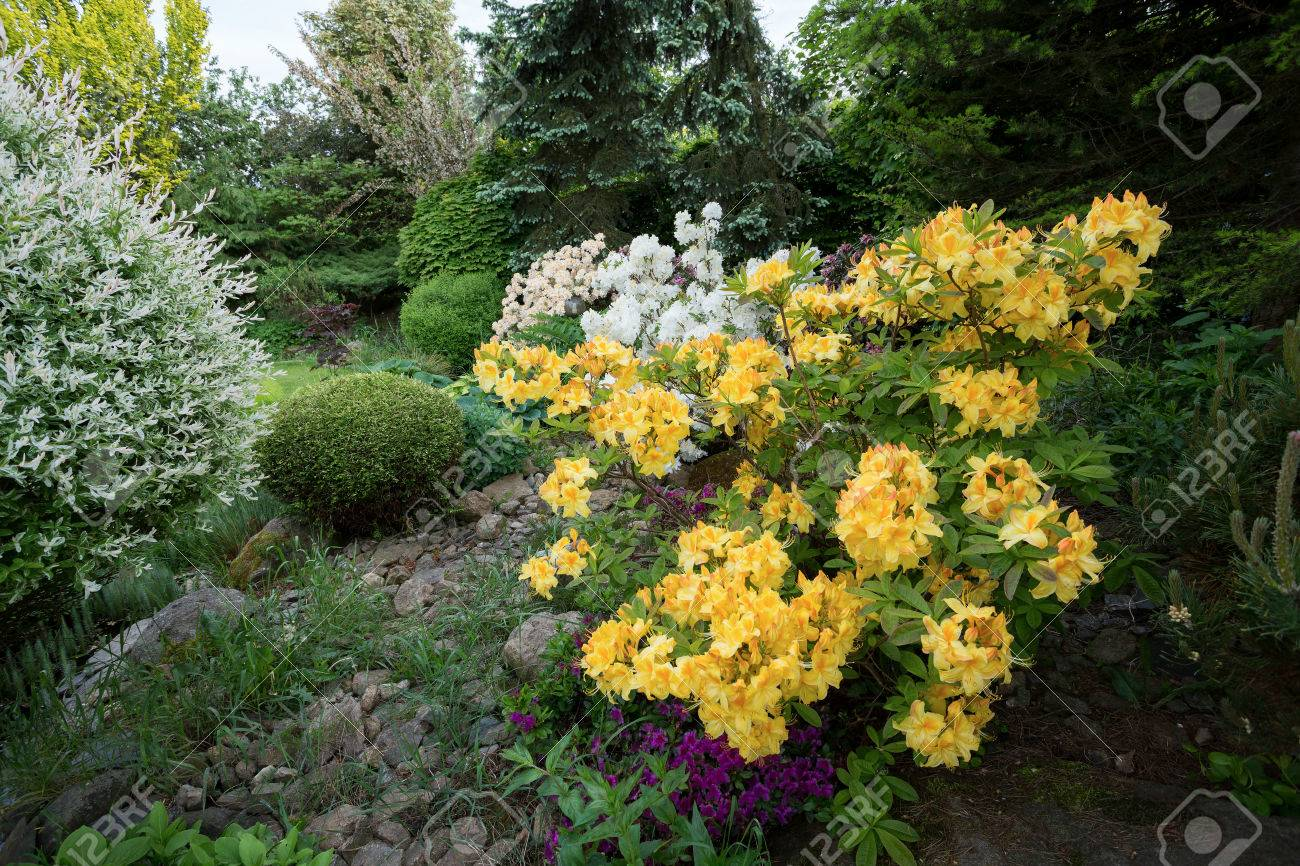 Beautiful Spring Garden Design With Flowering Rhododendron And