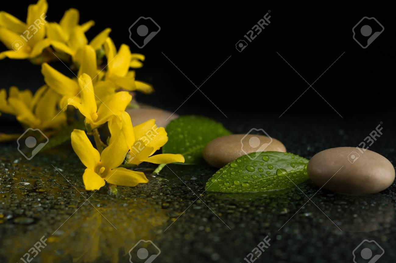 Pebbles and yellow flower on black with water drops zen stone pebbles and yellow flower on black with water drops zen stone on black background mightylinksfo