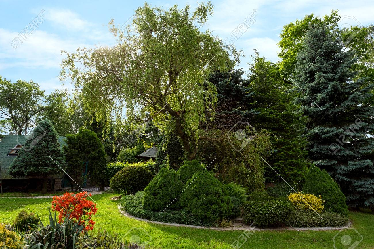 Belle conception de jardin de printemps, avec des arbres conifères, l\'herbe  verte et le soleil eneving. design de luxe, jardinage. jardin vert au ...