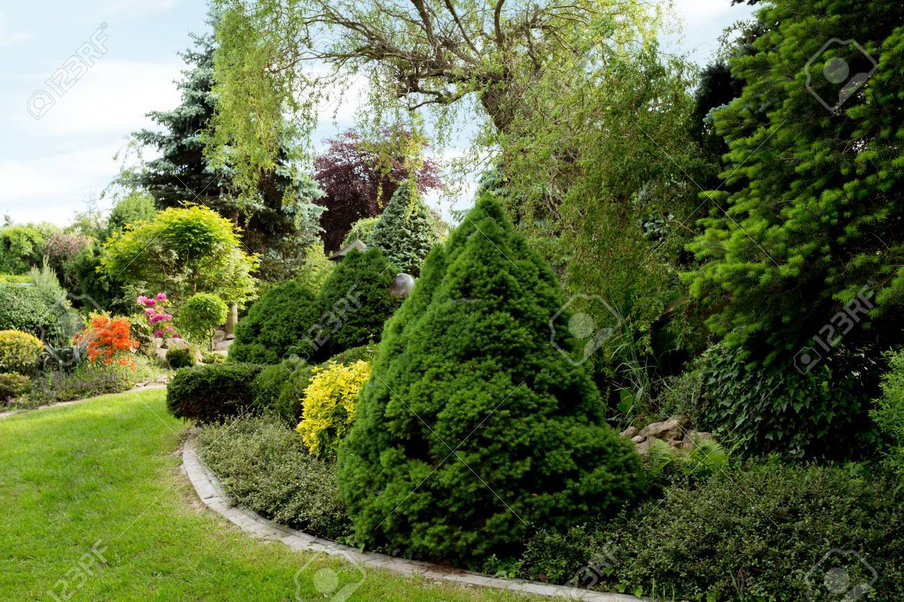 Beautiful Spring Garden Design, With Conifer Trees, Green Grass And Eneving  Sun. Luxury