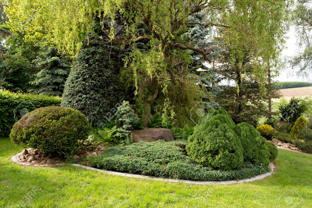 beautiful spring garden design with conifer trees green grass and eneving sun luxury - Garden Design Trees