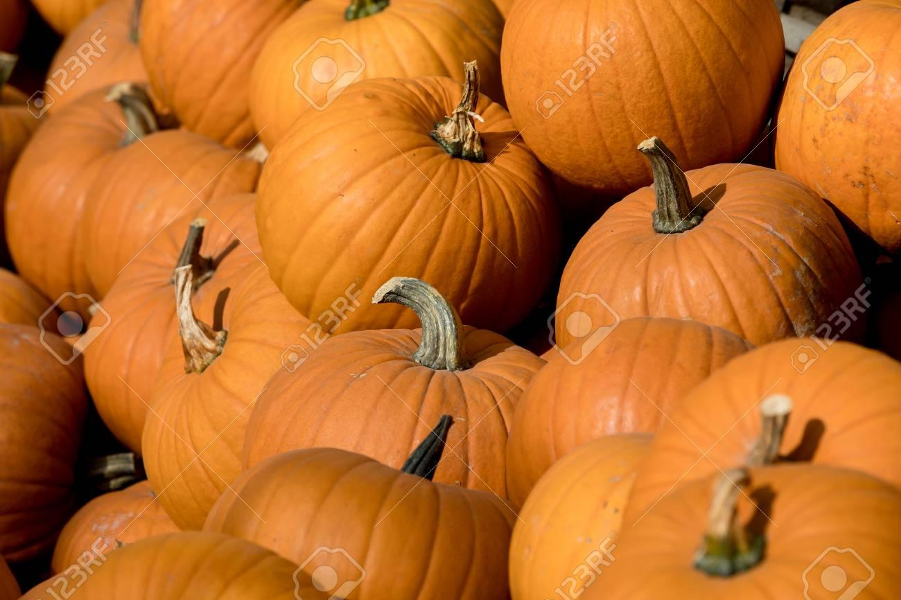 Herbst Halloween Dekoration Kurbisse Sammlung Auf Boden Als Alltag Fallen Herbst Im Herbst Herbst Garten Lizenzfreie Fotos Bilder Und Stock Fotografie Image 65107624