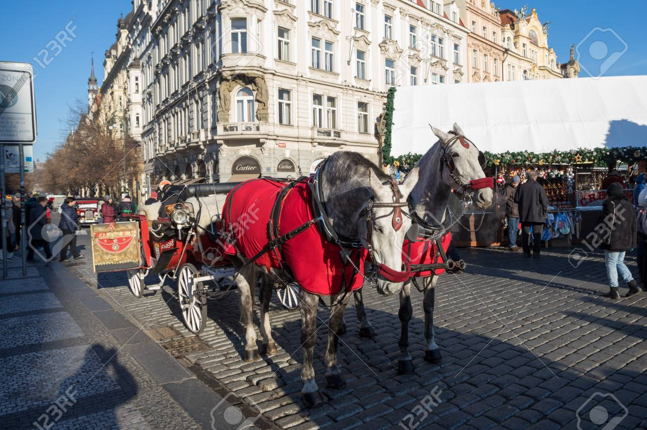 Prague December 3 White Horses Hitched To Horse Carriage Waiting Stock Photo Picture And Royalty Free Image Image 67531415