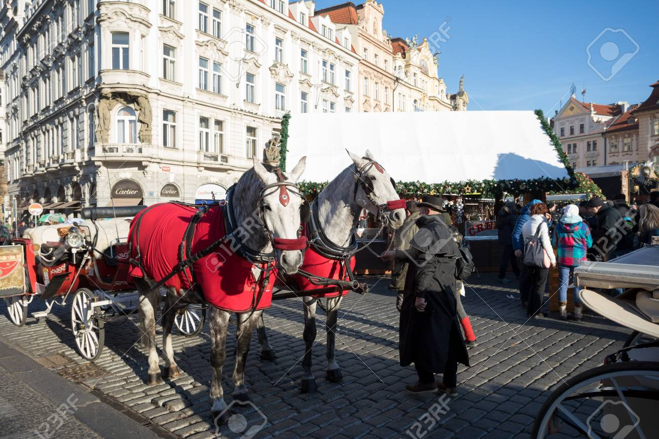 Prague December 3 White Horses Hitched To Horse Carriage Waiting Stock Photo Picture And Royalty Free Image Image 67531552