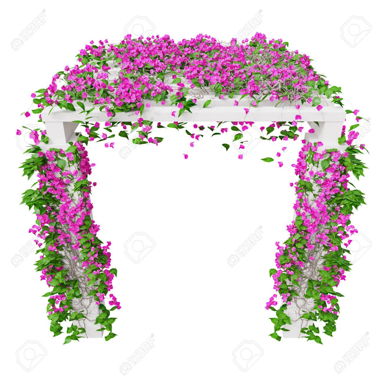 Pink Climbing Flowers Bougainvillea 3d Graphic Isolated Object