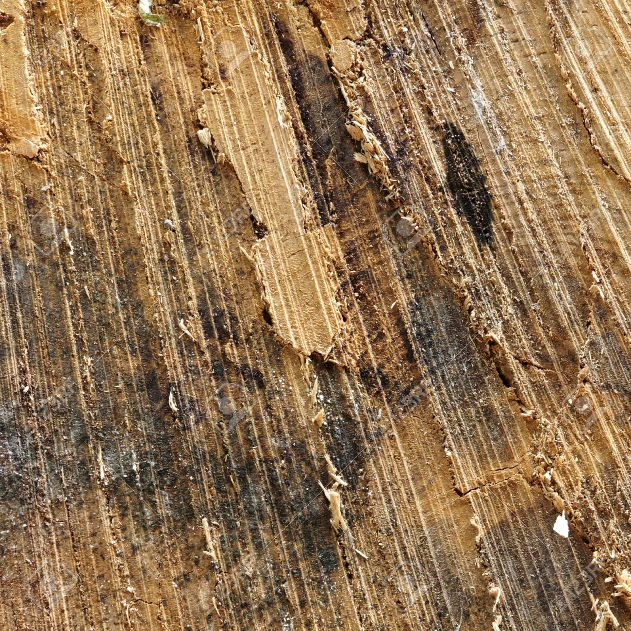 Kiefernholz-Stamm Querschnitt, Natürliche Textur Oder Rahmen-Quadrat ...