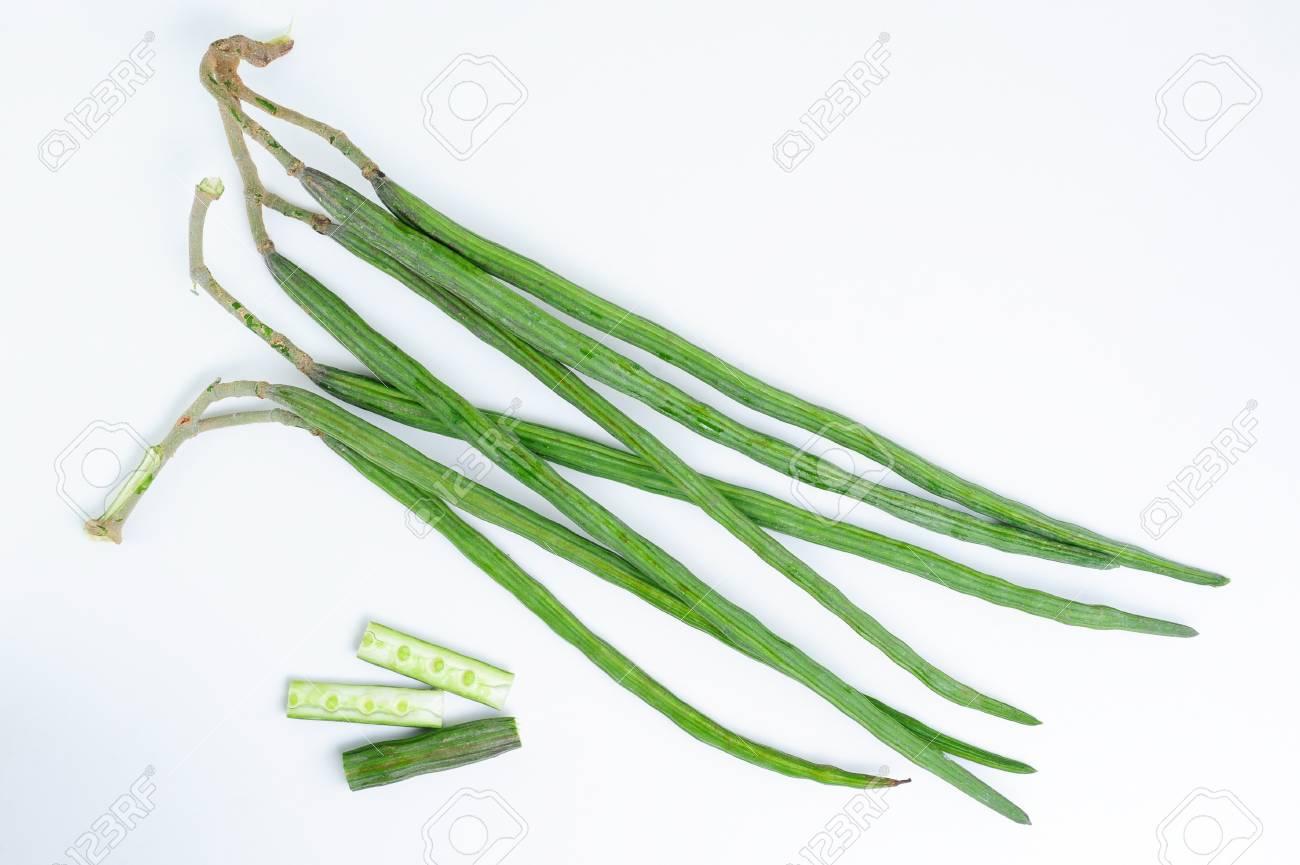 The Drumstick Plant also known as Moringa oleifera Stock Photo - 18856153