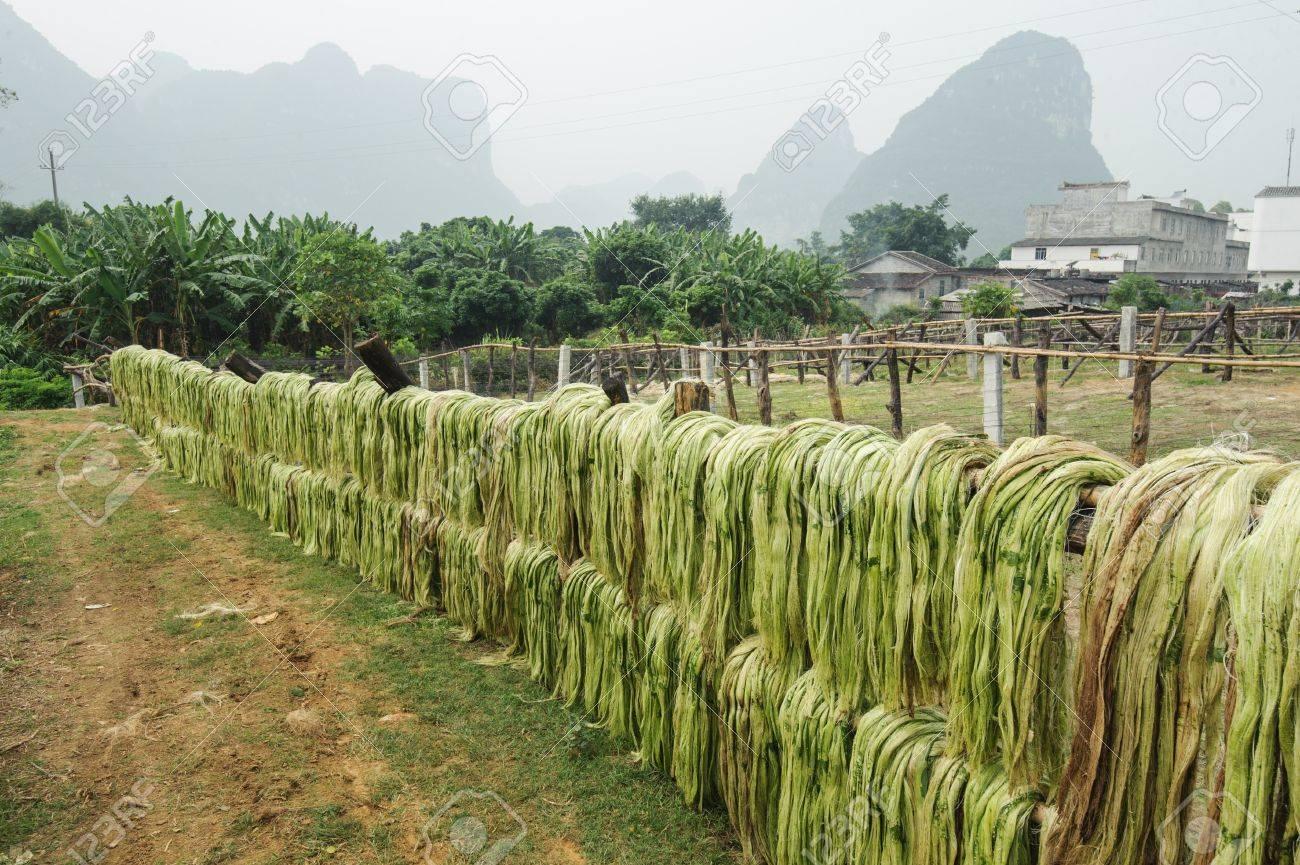 Sisal fiber, raw material from China Stock Photo - 21727148