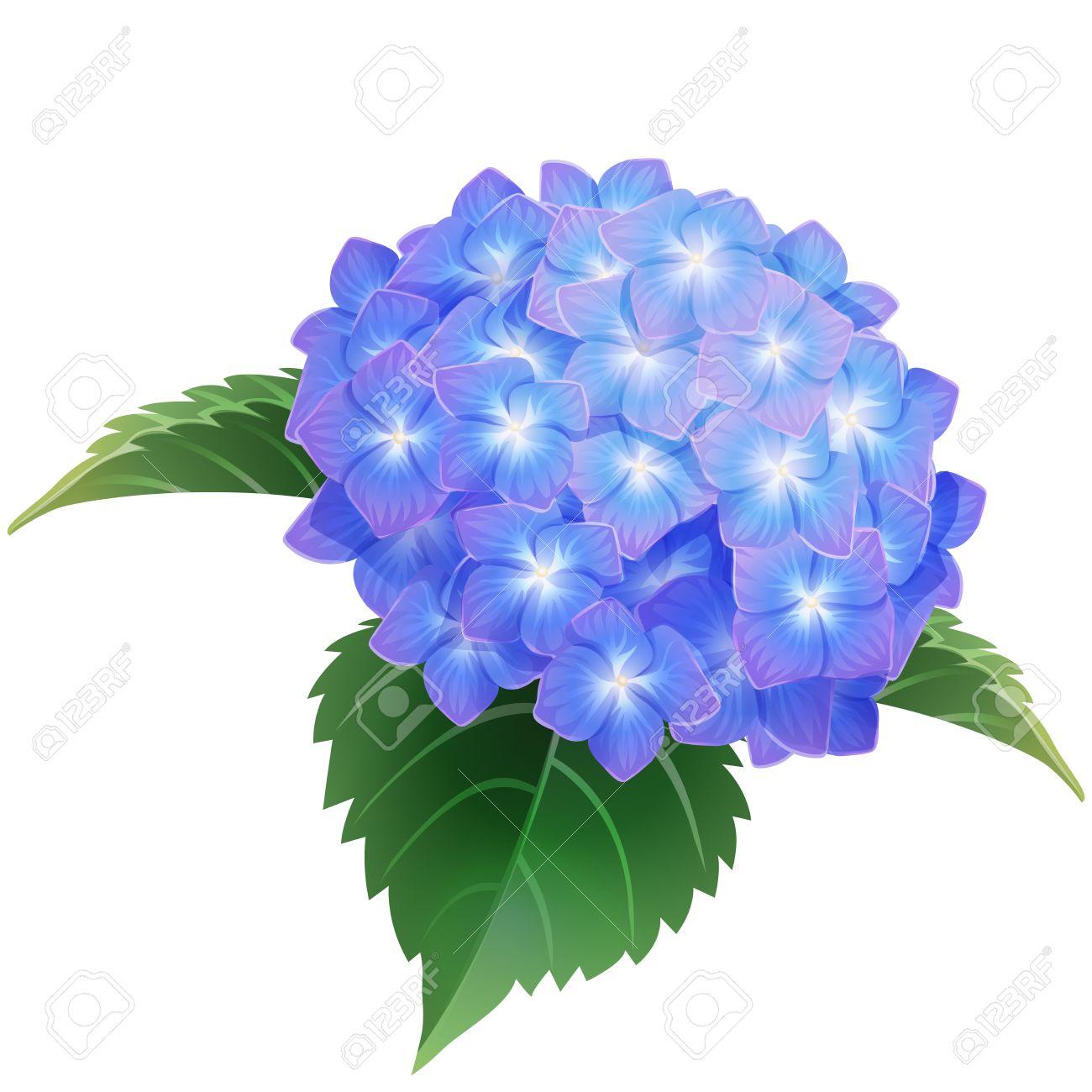ブルー紫陽花あじさいの花イラストのイラスト素材ベクタ Image 60067827