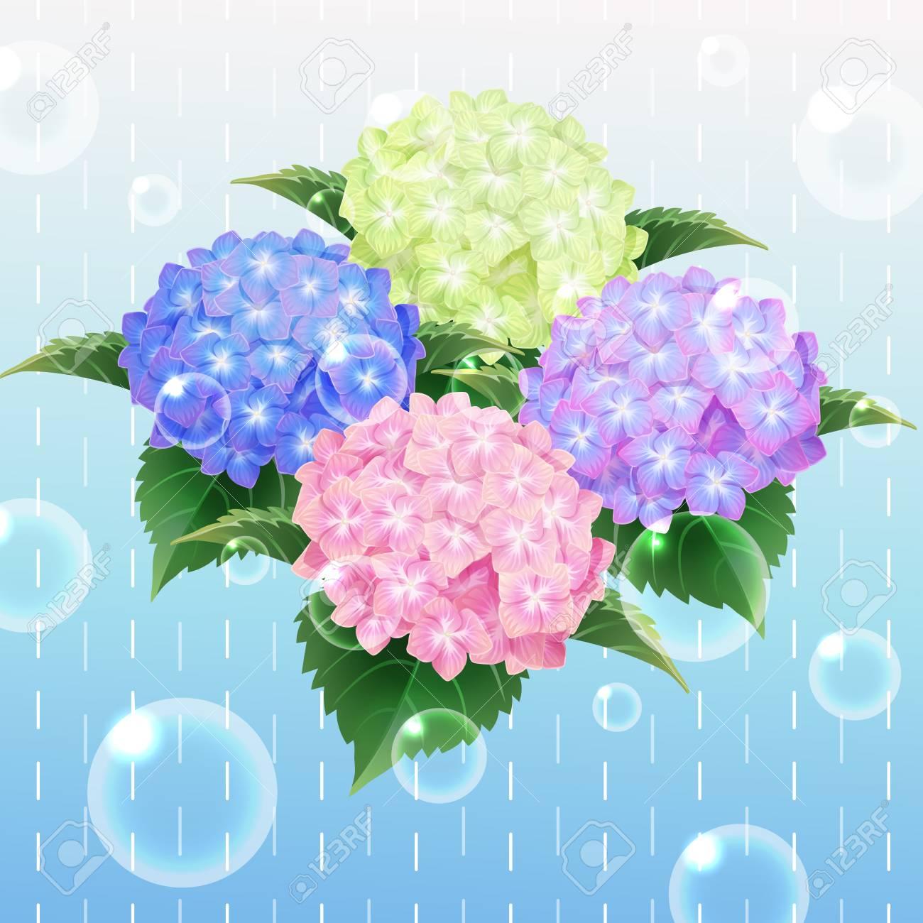 4 色紫陽花あじさいの花イラストのイラスト素材ベクタ Image 60067836