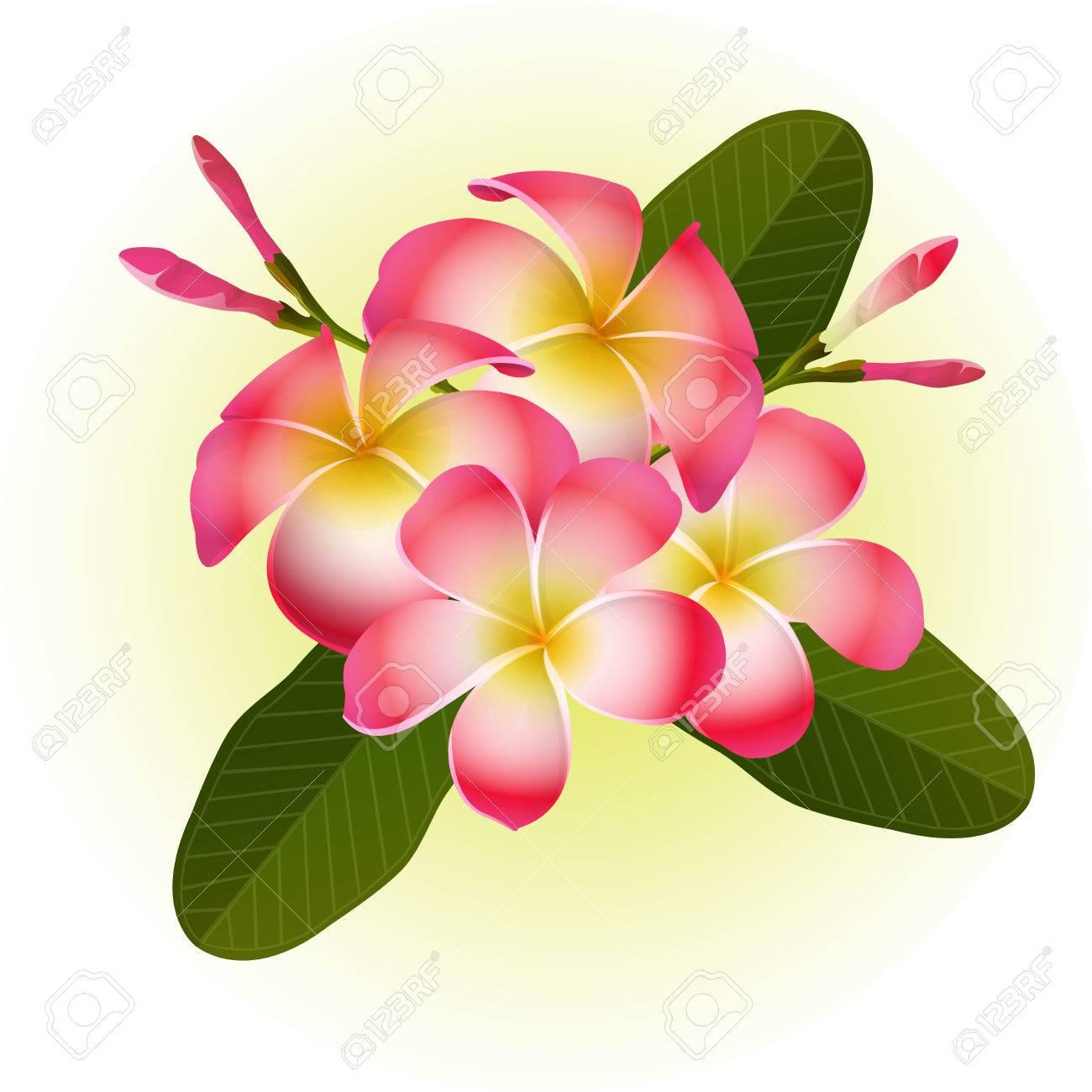 赤いフランジパニ プルメリア南国の花イラストのイラスト素材 ベクタ Image