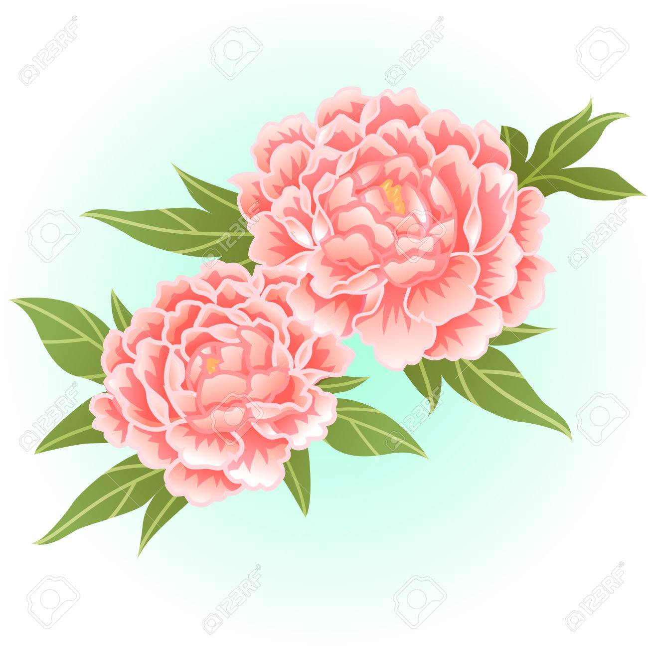 Old Rose Pink Peony Flower Illustration Royalty Free Cliparts
