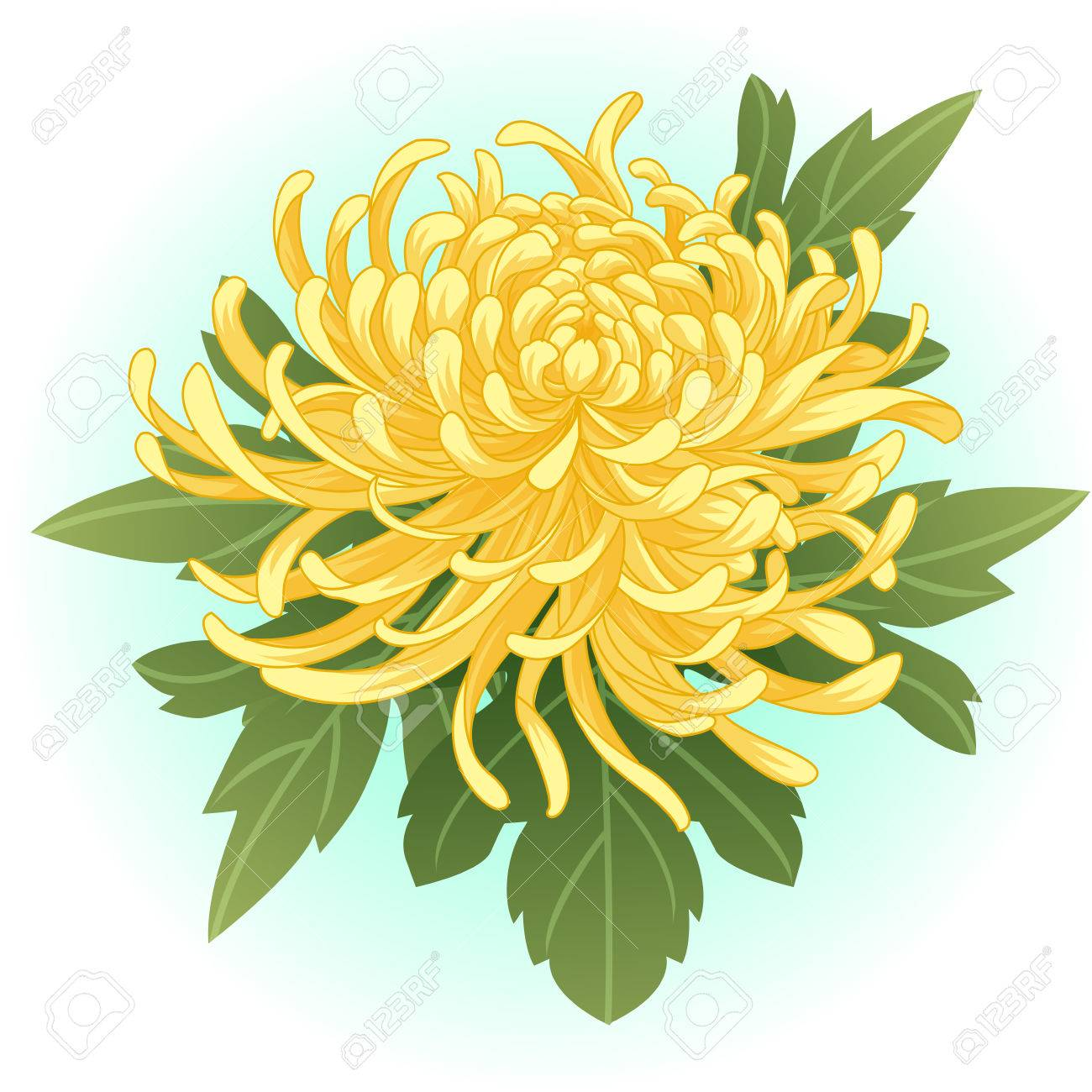 Yellow Chrysanthemum Flower Illustration Royalty Free Cliparts