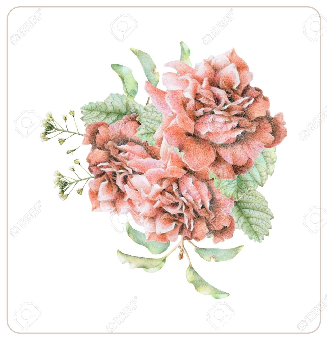 Composición De Diferentes Flores De Primavera Y Plantas Dibujadas A