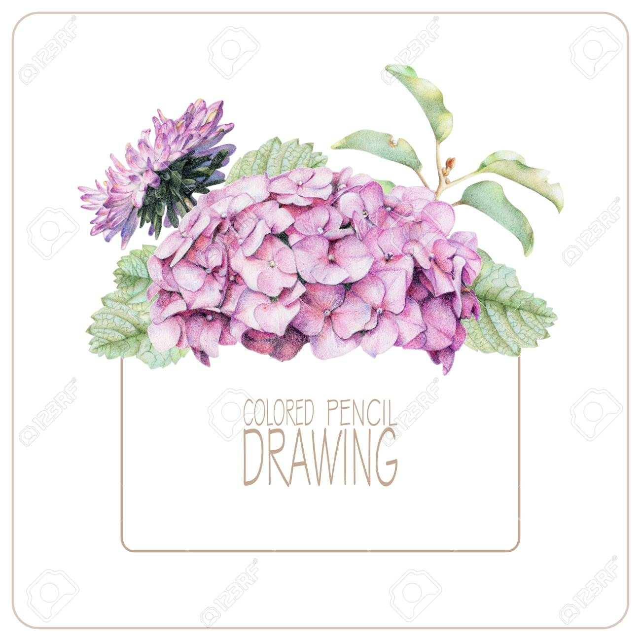 Background With Beautiful Spring Flowers And Plants Drawn By Stock