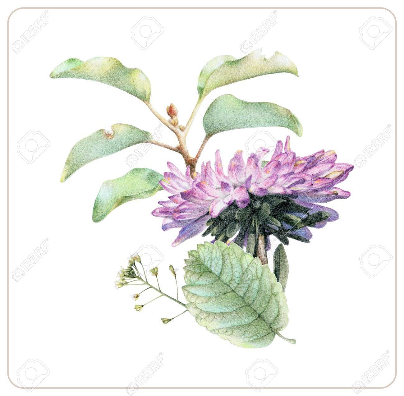Zusammensetzung Von Verschiedenen Frühlingsblumen Und Von Anlagen