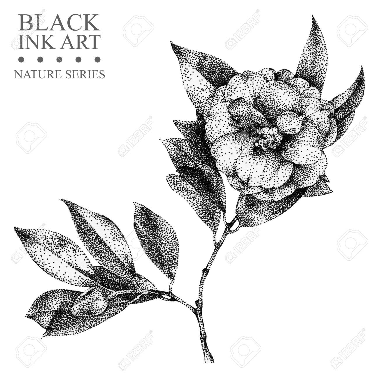 黒インクで手書きの花椿のイラストグラフィックの描画点描技法花の