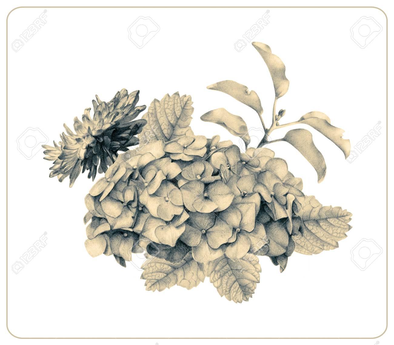 Composition De Différentes Fleurs Printanières Et Plantes Dessinées à La Main Avec Des Crayons De Couleur Dessin Au Crayon Bouquet Floral Ikebana